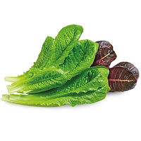 Romaine-mix_edited.jpg