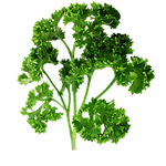 vegs_parsley.png