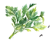 herb_vector.png