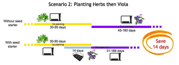 seed starter example timeline_viola_eng.