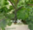 Harvest_salad veggie.png