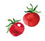 tomato_vector.png
