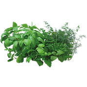 herbs-selected.png