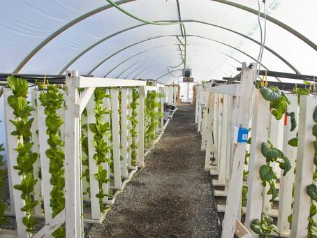 Why hydroponics?
