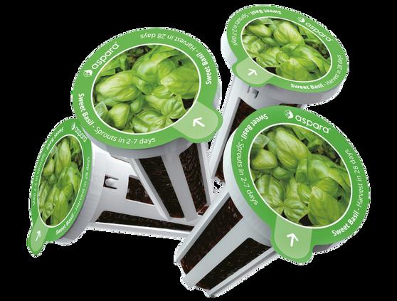 Seed capsule_basil.png