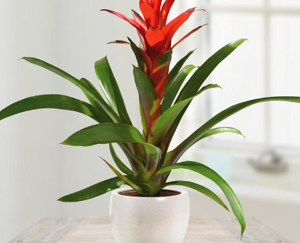 Indoor plants make you feel better