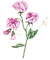 flower vector.png
