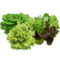 lettuces-selected.png