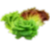 vegs_mix_lettuces.png
