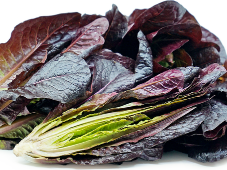 What is red romaine lettuce?