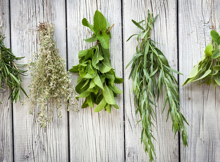 Why everyone should grow an herb garden?