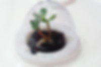 Germination dome_over.png
