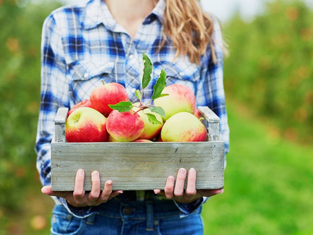 Middle & High School Students: Apple Picking Event This Saturday, October 2!