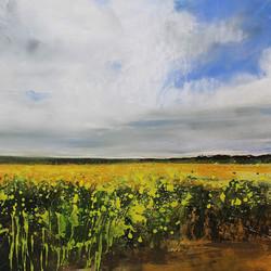A Field Of Rape Seed, Allerby