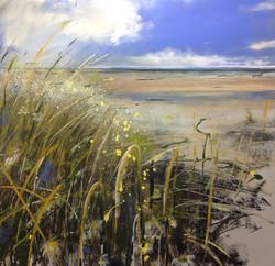Daisy Beach