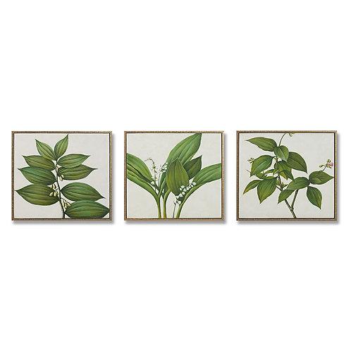 Triptic Plant
