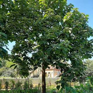 Ecoplante 374  5 ans Serbie