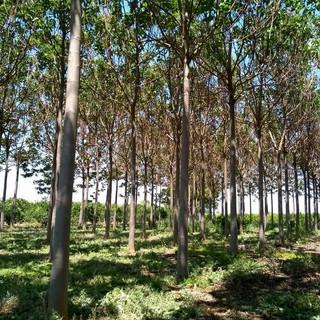 Plantation 5 ans