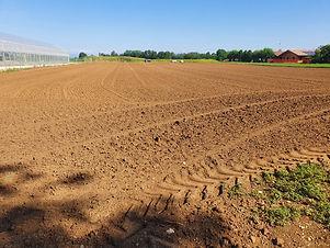 Plantation Paulownia