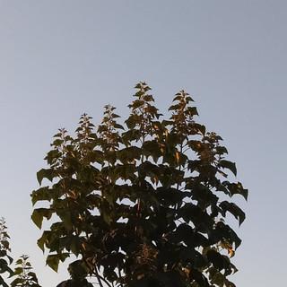 Formation canopée Shantong 3ème année