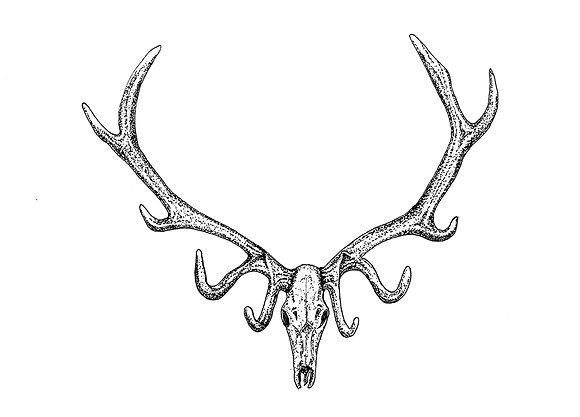 Elk Skull  - Original Pen & Ink