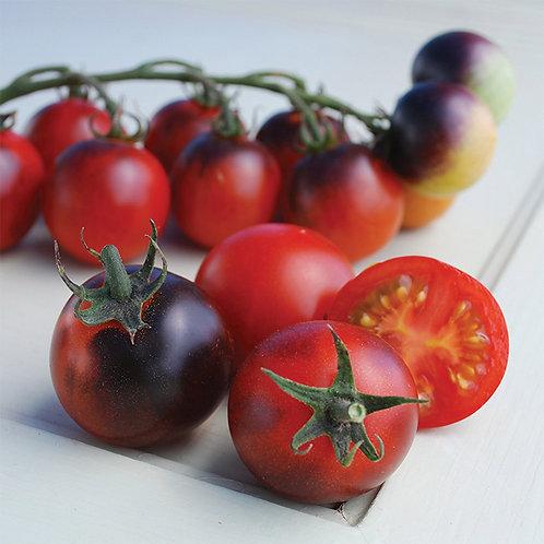 Indigo Cherry Drops Tomato Plant  2-4in