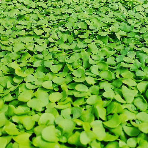 Basil Mix Microgreens - 2oz small clamshell