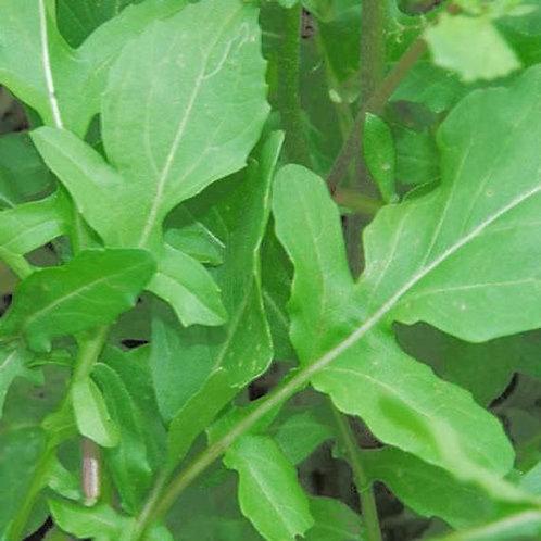 500 Arugula Roquette Seeds