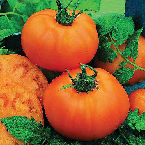 Chef's Choice Orange Tomato Plant - 3in