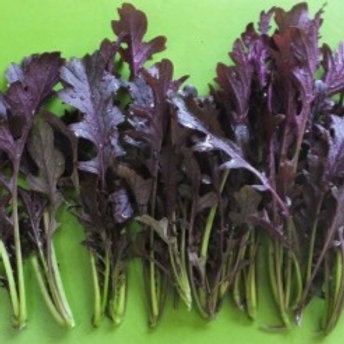 250 Mizuna Purple Miz America Seeds