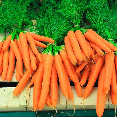 500 Carrot Scarlet Nantes Seeds