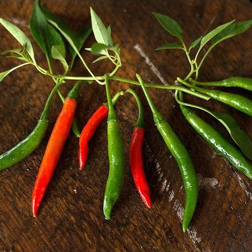 Birds Eye Chilli Peppers Plant 2-4 in.
