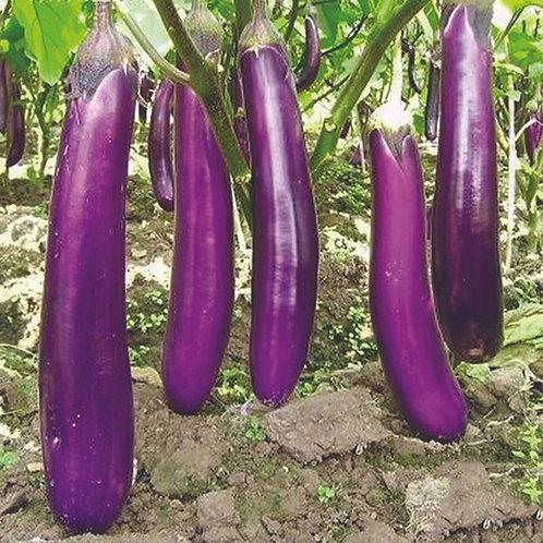 Long Purple Eggplant Plant  2-3in