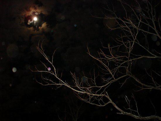 """we are night sky"""
