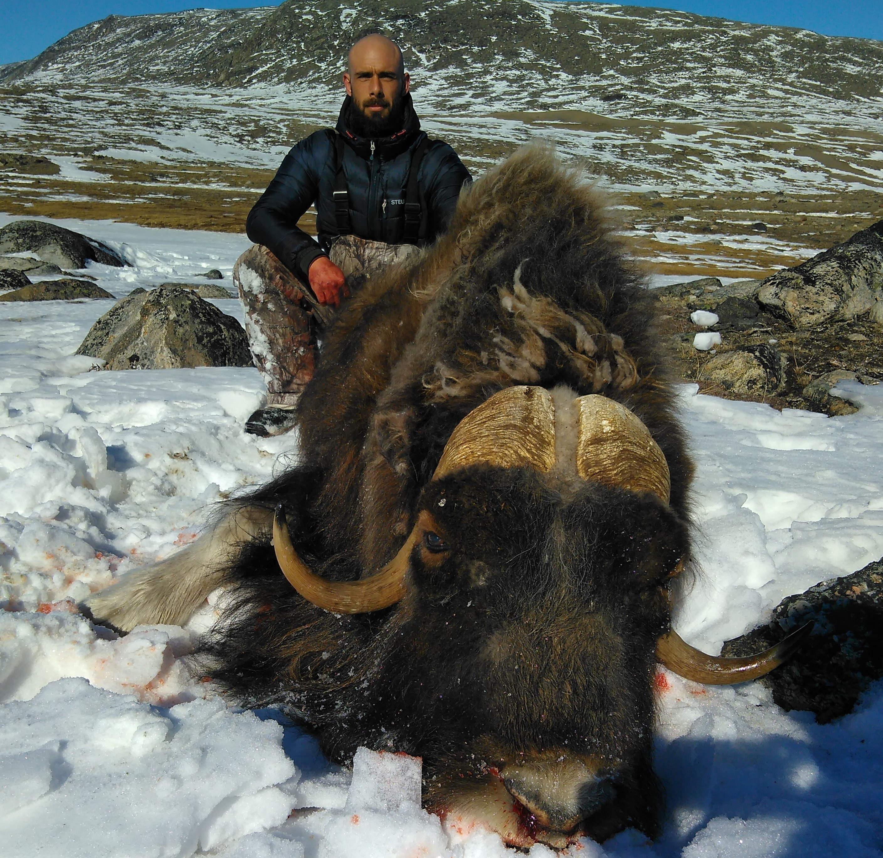 MUSK OX WINTER HUNT in MARCH-APRIL