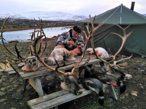 CARIBOU HUNTING in SEPTEMBER - OCTOBER 2021