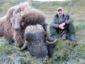 MUSK OX SUMMER HUNT in JULY - AUGUST 2021