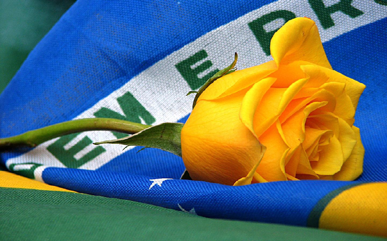 dia-da-bandeira-do-Brasil-4