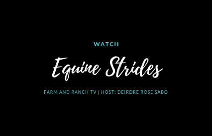 Equine Strides.png
