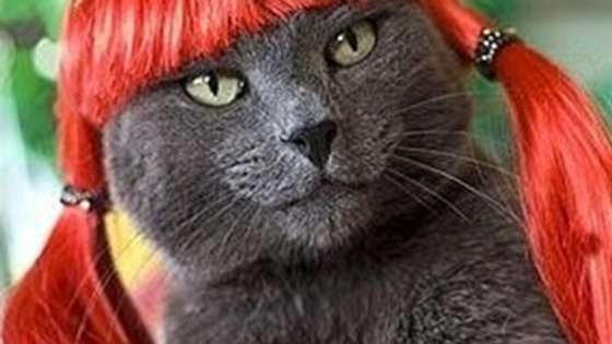 Red Russian Blue Cats Dogs Wig  Orange Hair Red Hair for Pets .
