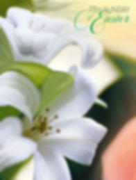 Easter19_Week7_C_Eng_CVR.jpg