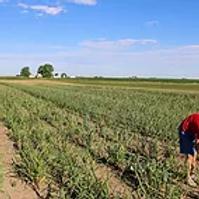 Garlic Boss (Francesville, Indiana)