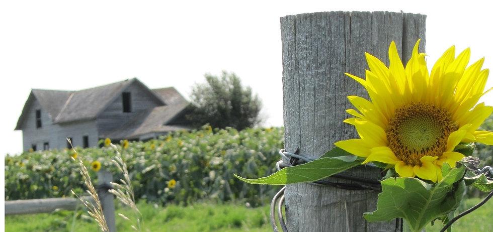 Sunflower Old House.jpg