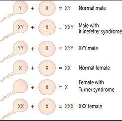 Chromosomes Graphic.jpg