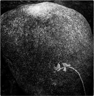 stone leaf.jpg