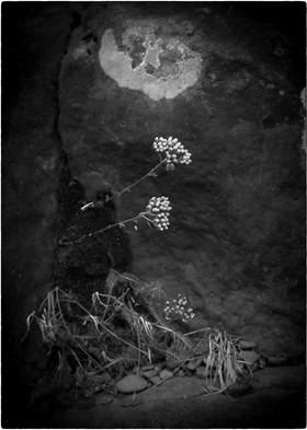 flowers and rock.jpg