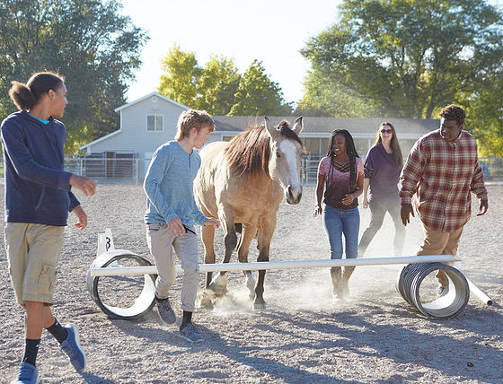 Group equine.jpg