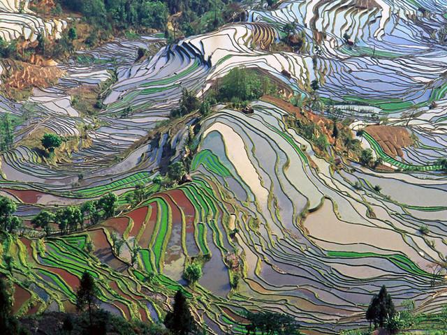 Diversified Landscapes