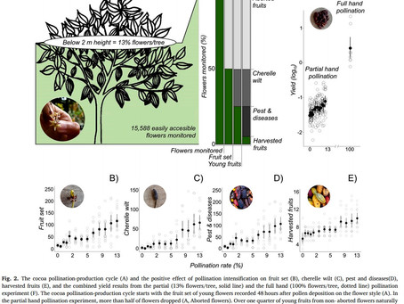DECEMBER 2020 - Manuel published his study on hand pollination on cocoa yields