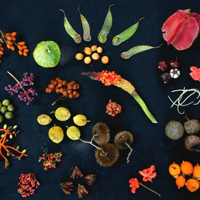 FEBRUARY 2020 | Integrating Agroecology in the Post2020 Global Biodiversity Framework